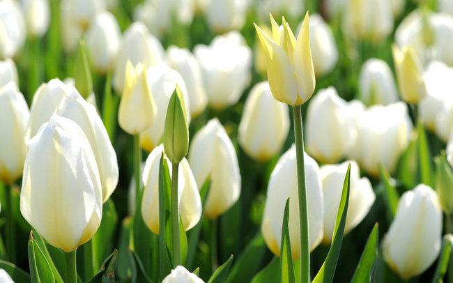 Мамаlыgа: Красивая и яркая весна