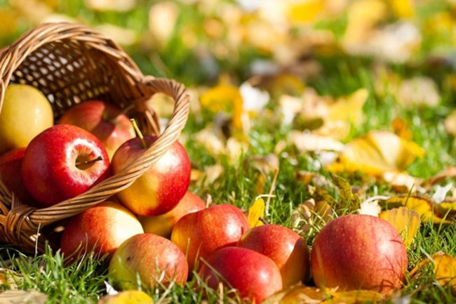 Русская рюмочная № 1: Яблочный спас
