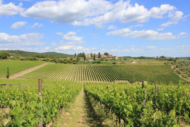 Stroganoff Steak House: Ужин с итальянскими винами